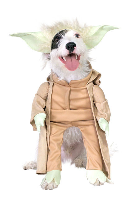 A terrier wearing a Yoda costume