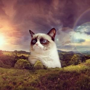 The-Shire-Grumpy-Cat