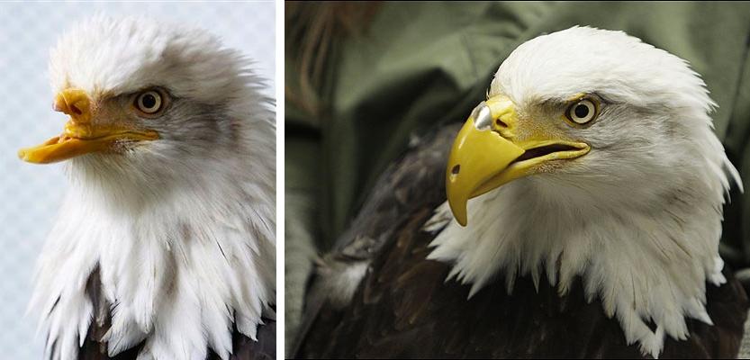 beauty-3D-beak