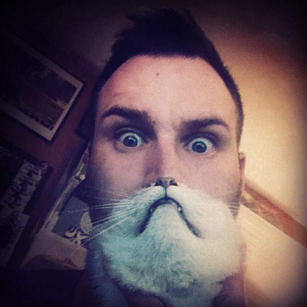 cat-beards-1