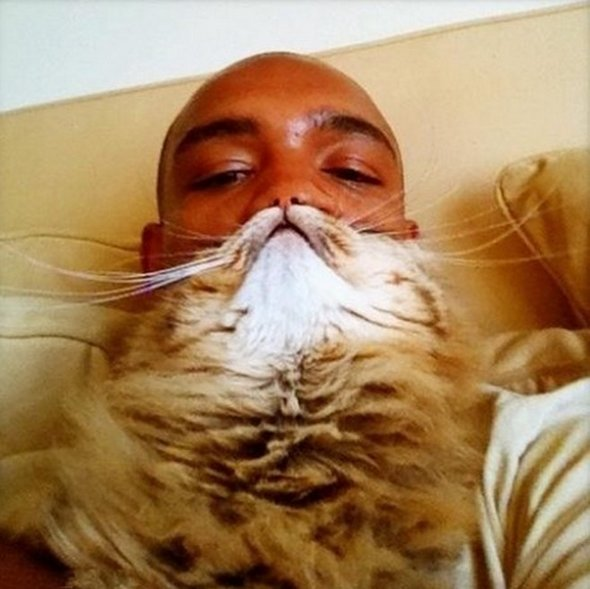 cat-beards-3