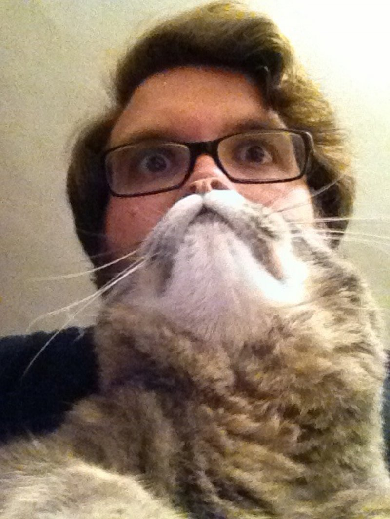 Cat Bearding with Glasses