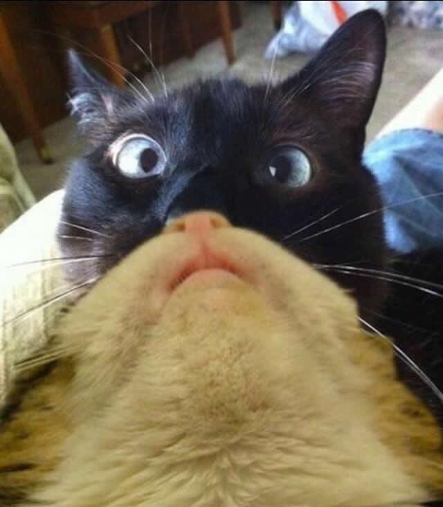 Double Catbeard