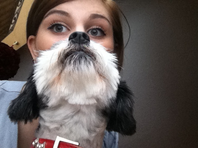 Dog Bearding - Dogs can be beards too