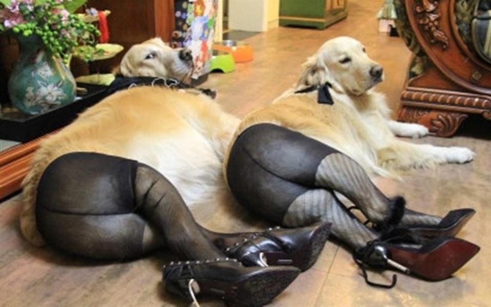 Dogs in pantyhose and high heels