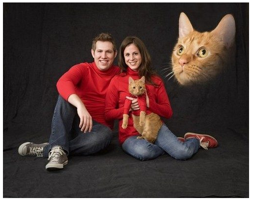 10 Most Awkward Cat Family Photos