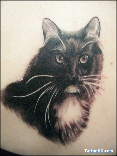 Pet Tattoos: Old Cat