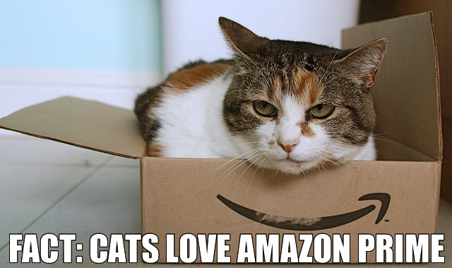 Fast, FREE shipping on over million eligible items Free Two-Day Shipping with Amazon Prime. Need a last minute gift? Can't get out of the house?