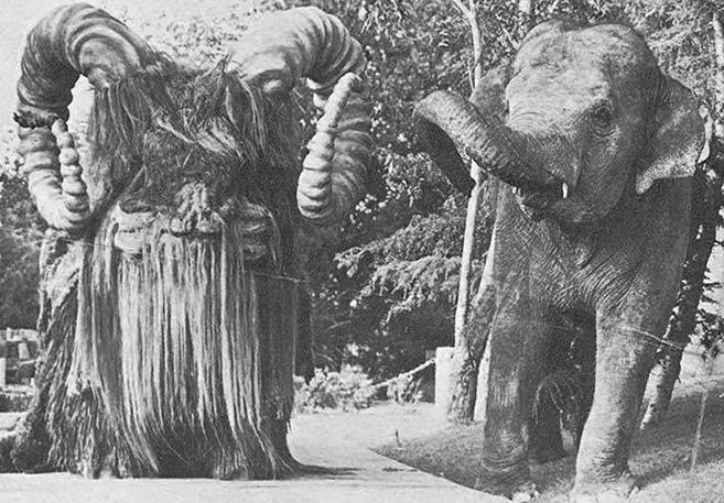 Bantha elephant